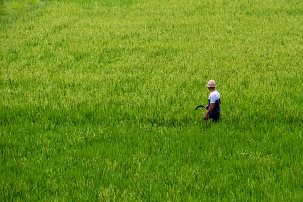 玄米と白米の作られ方の違い